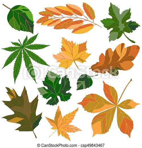 feuilles, ensemble - csp49843467