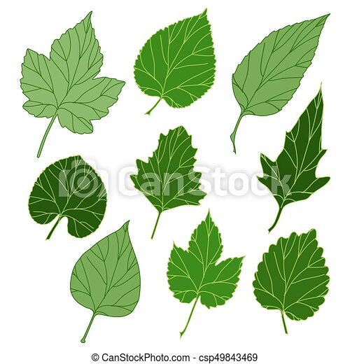 feuilles, ensemble - csp49843469