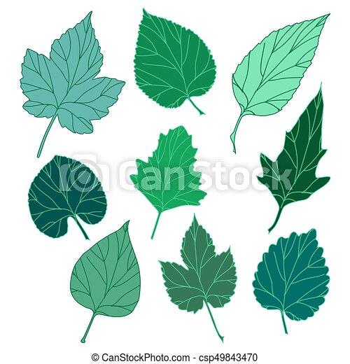 feuilles, ensemble - csp49843470