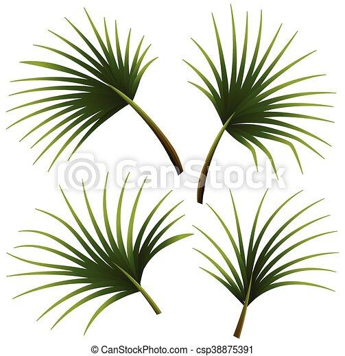 feuilles, ensemble, paume - csp38875391
