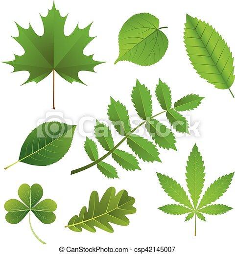 feuilles, ensemble, vert - csp42145007