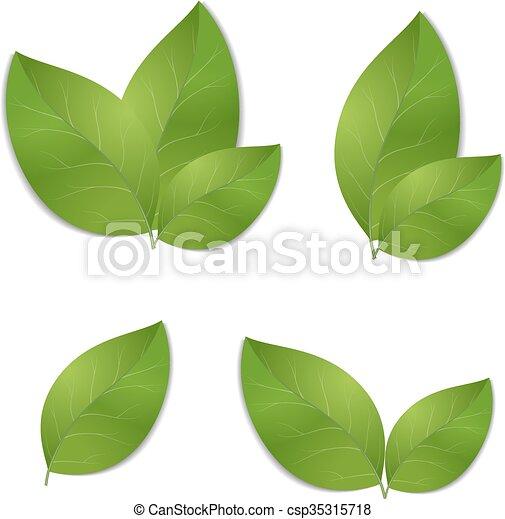 feuilles, ensemble, vert - csp35315718