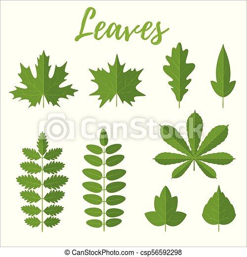 feuilles, ensemble, vert - csp56592298
