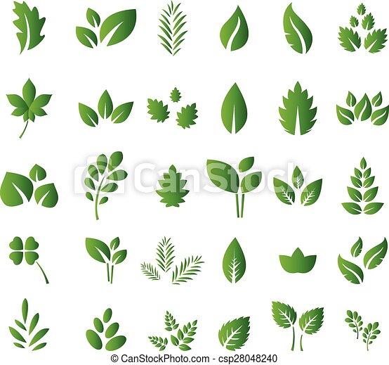 feuilles, ensemble, vert - csp28048240