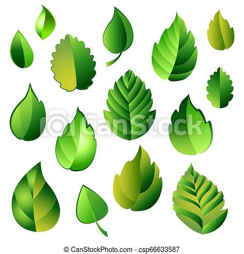 feuilles, ensemble, vert - csp66633587