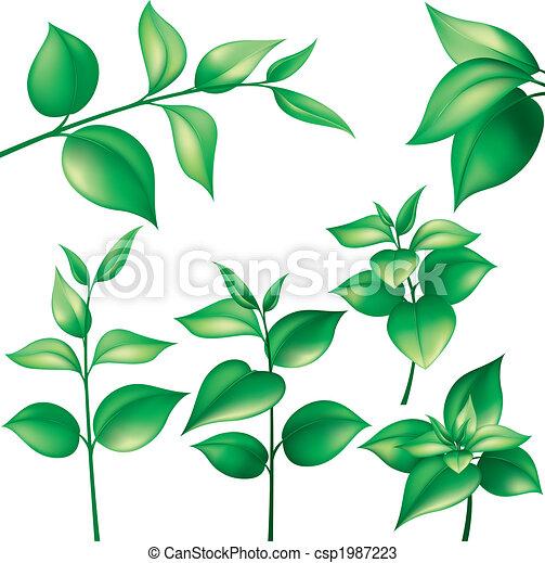 feuilles, ensemble, vert - csp1987223