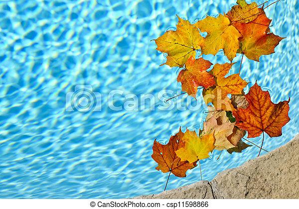 feuilles, flotter, piscine, automne - csp11598866
