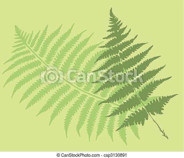 feuilles, fougère - csp3130891
