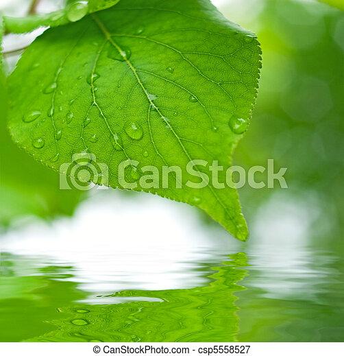 feuilles, foyer peu profond, refléter, eau verte - csp5558527