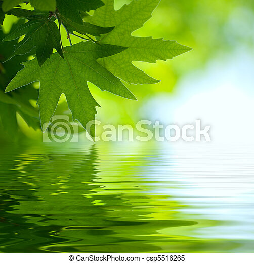 feuilles, foyer peu profond, refléter, eau verte - csp5516265