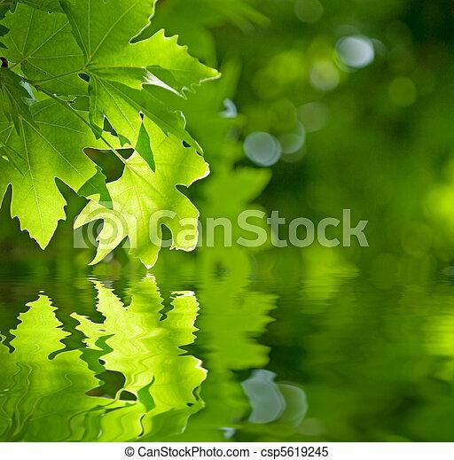 feuilles, foyer peu profond, refléter, eau verte - csp5619245