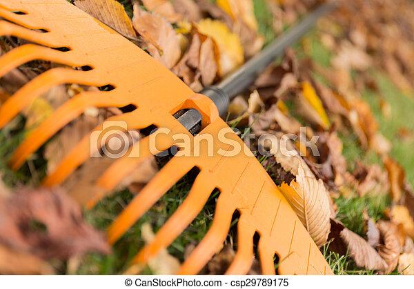 feuilles, haut fin, râteau - csp29789175