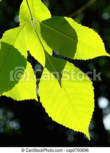 feuilles - csp0700696