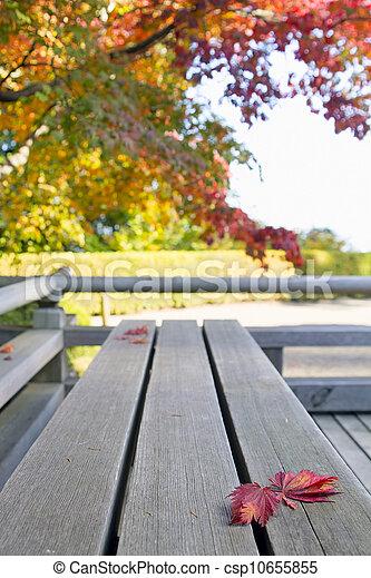 feuilles, japonaise, banc, bois, automne, érable - csp10655855