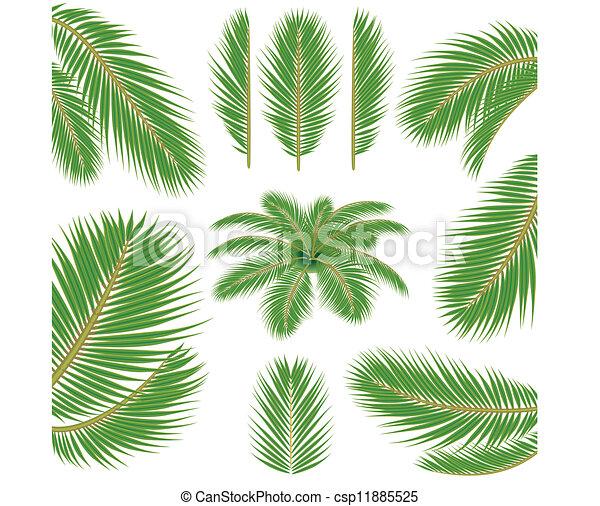 feuilles, paume - csp11885525