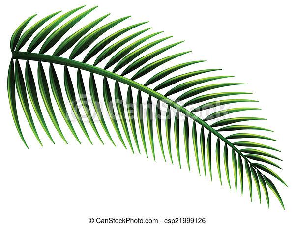 feuilles, paume - csp21999126
