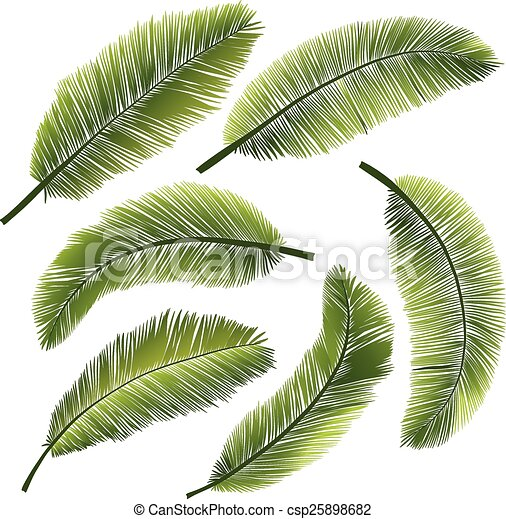 feuilles, paume - csp25898682