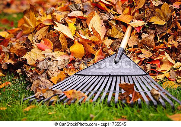 feuilles, râteau, automne - csp11755545