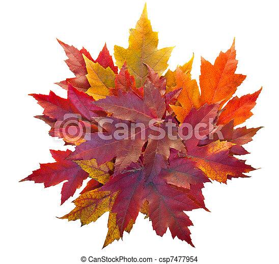 feuilles, tas, isolé, érable, automne - csp7477954