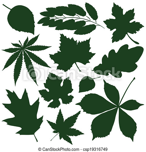 feuilles - csp19316749