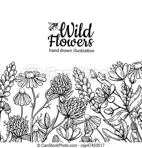 feuilles, vecteur, usines, dessin, pré, isolé, fleurs, set., sauvage - csp47453517