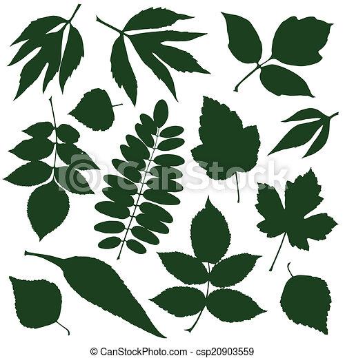 feuilles, vert - csp20903559
