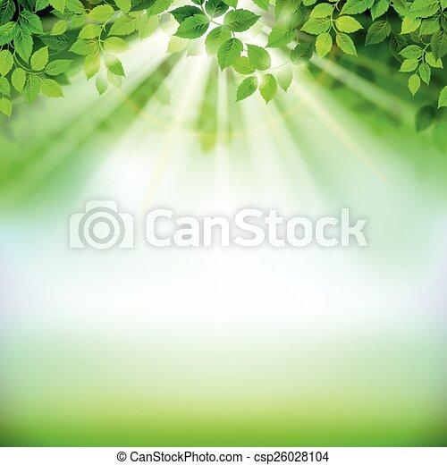feuilles, vert - csp26028104
