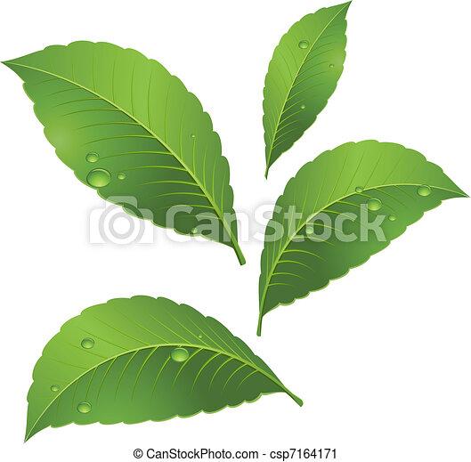feuilles, vert - csp7164171