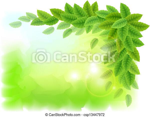 feuilles vertes, ensoleillé, fond - csp13447972