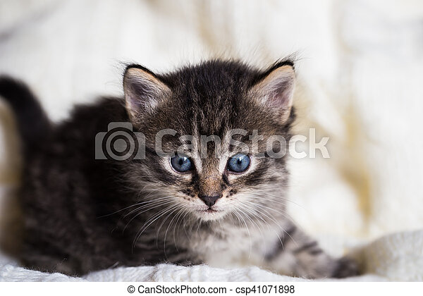 Few weeks old tabby kitten with fluffy fur - csp41071898
