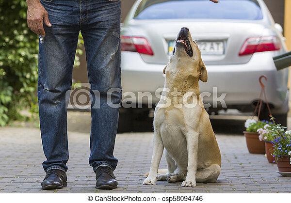Un perro grande y amarillo claro Labrador sentado en un patio pavimentado en las patas de un hombre y mirando al dueño de un coche con vistas traseras borrosas y plantas verdes. Amistad, cuidado, amor y fidelidad concepto. - csp58094746
