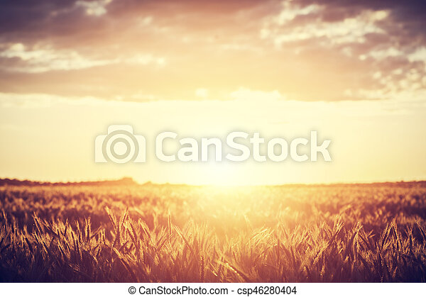 Field, countryside at sunset. Harvest time. Vintage - csp46280404