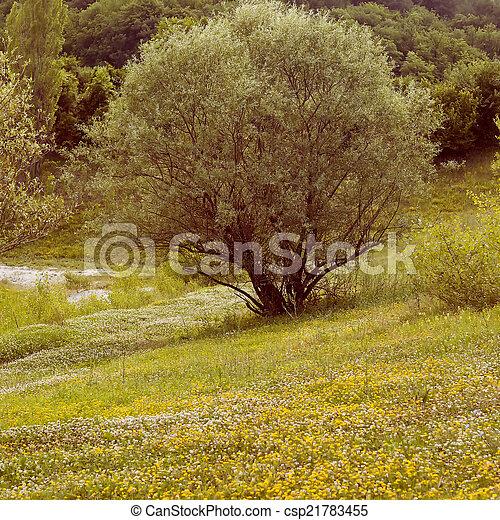 field daisies - csp21783455
