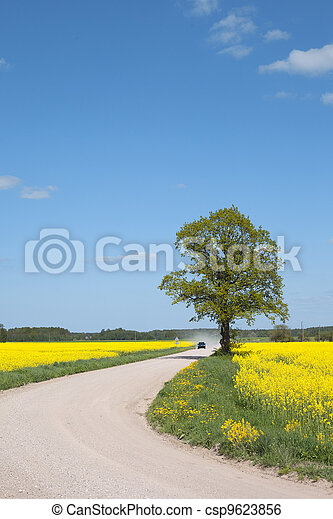 field., estrada, canola - csp9623856