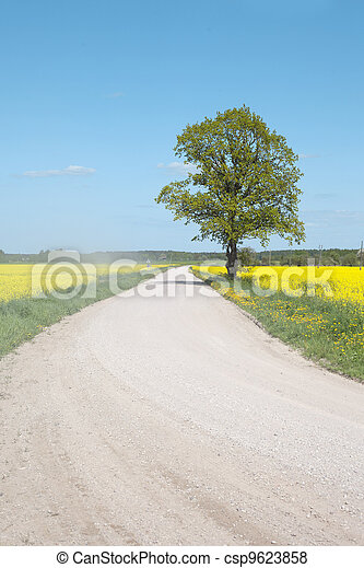 field., estrada, canola - csp9623858