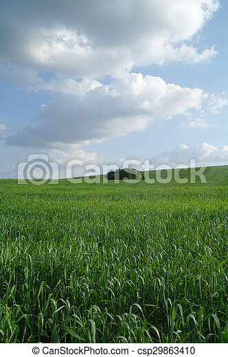 Field in a sunny day. - csp29863410