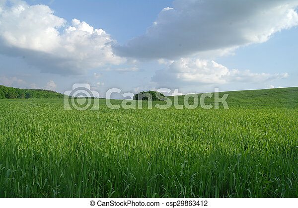Field in a sunny day. - csp29863412