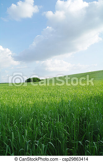 Field in a sunny day. - csp29863414