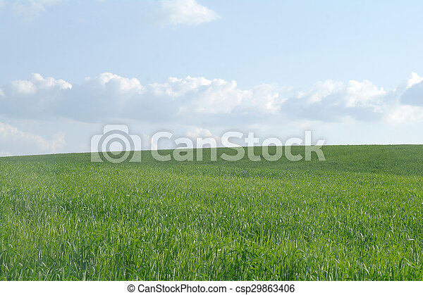 Field in a sunny day. - csp29863406
