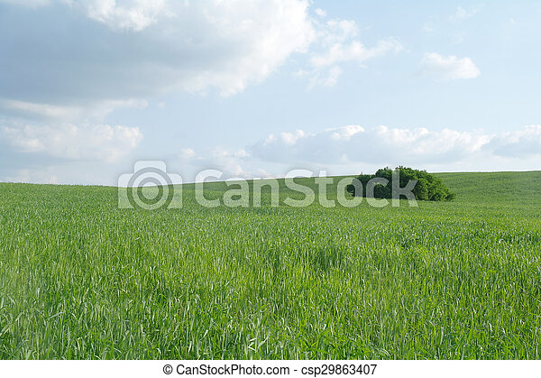 Field in a sunny day. - csp29863407