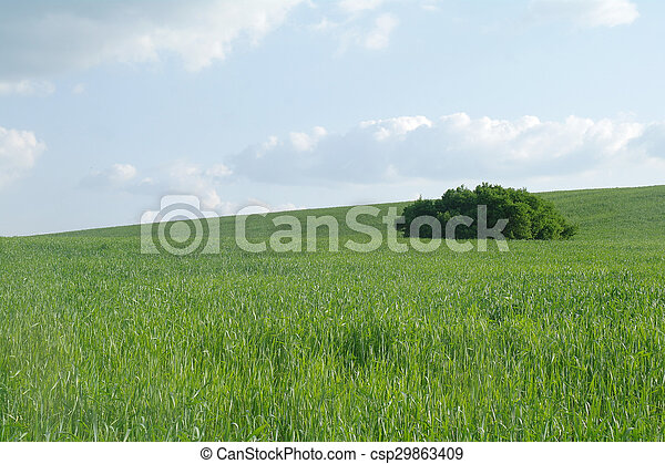 Field in a sunny day. - csp29863409