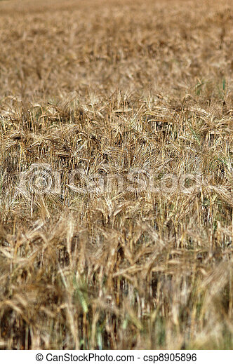 Field in soft light - csp8905896