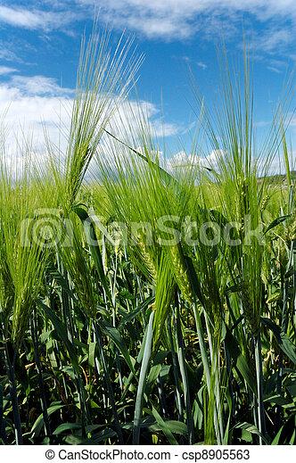 Field in Soft light - csp8905563