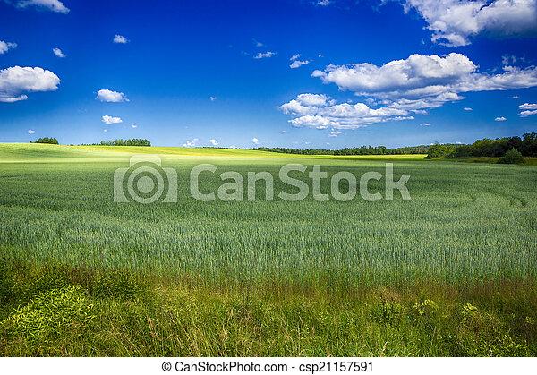 field irrigation with a crop - csp21157591