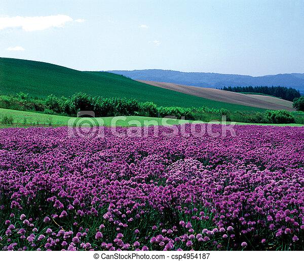 Field Landscape - csp4954187