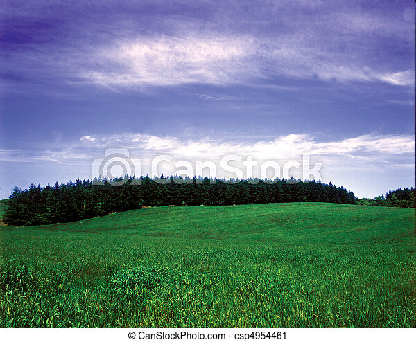 Field Landscape - csp4954461