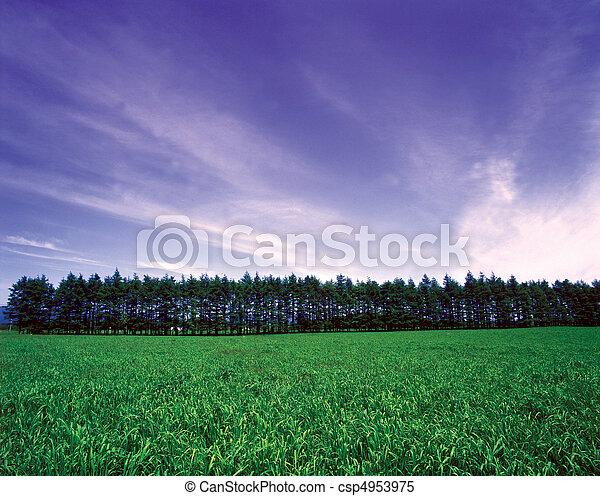 Field Landscape - csp4953975