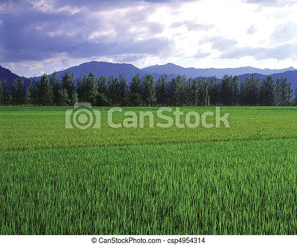 Field Landscape - csp4954314