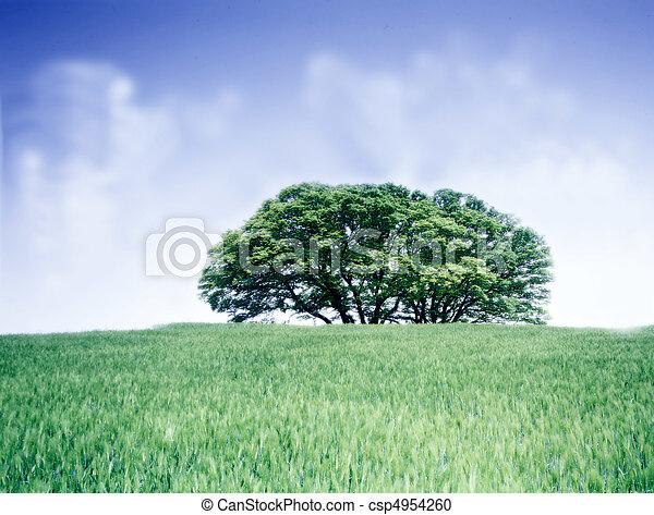 Field Landscape - csp4954260