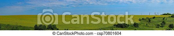 Field of canola panorama - csp70801604